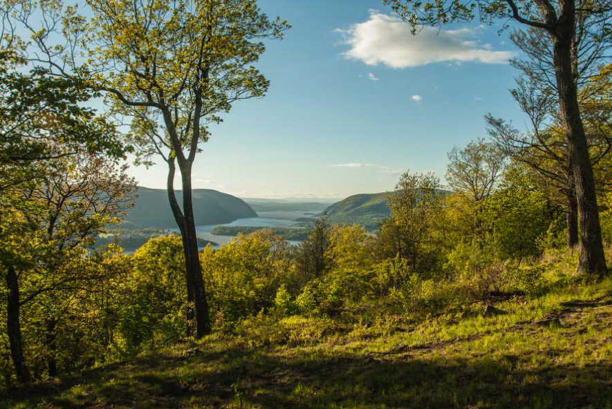 Green trees and bushes overlooking the Hudson River in the summer